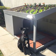 Green-roof dog house with rooftop garden! Dog Backyard, Dog Friendly Backyard, Luxury Dog Kennels, Cool Dog Houses, Outside Dog Houses, Dog House Plans, Dog Yard, Pet Hotel, Dog Rooms