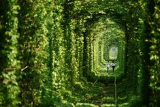 Ukraine's Leafy Green 'Tunnel of Love' is a Passageway for Tra...