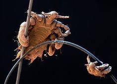 Você pensa que é a simples imagem de um nó? Então olhe mais de perto. Fascinante! |