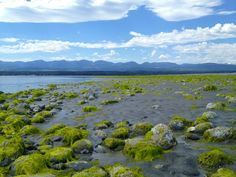 Low Tide, Goose Spit Comox BC Mother Nature, Mountains, Travel, Outdoor, Beautiful, Outdoors, Viajes, Destinations, Traveling