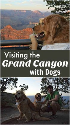 Planning a road trip with your dog?  Check out this guide to visiting the Grand Canyon with your dog!