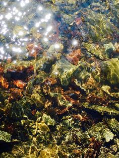 Reflections...by Tara Ashcroft Hoffmann of Taramberic Arts, NY.