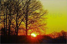Bäume im Sonnenuntergang Poster, Celestial, Sunset, Nature, Outdoor, Mists, Landscape, Pictures, Outdoors
