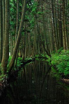 Deep forest in Fukura, Yamagata, Japan