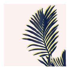 Minted x West Elm 3rd Challenge | Palm Study #2 // Cindy C Lackey