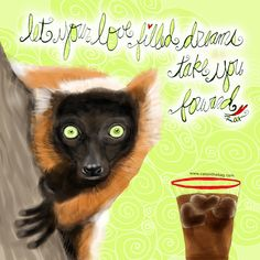 Let your love filled dreams take you forward. What my Coffee says to me July 15 - drink YOUR life in - place your gaze in the direction you want to go <3 (What my Coffee says to me is a daily, illustrated series created by Jennifer R. Cook for your mental health) #coffee#coffeelovers #lemurs #lemurlovers #dreams #love #forward #SundayFunday#art #illustration #creativity #makedreams #lemursofinstagram