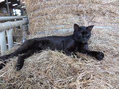 Chtim, le chat noir