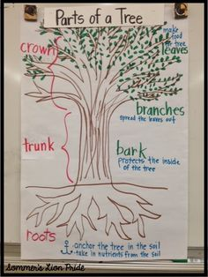 250 Best Pbl Trees Images On Pinterest Activities Learning And