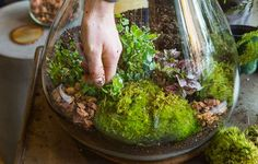 How to make a self-sustaining terrarium. http://rea.to/z7ewy