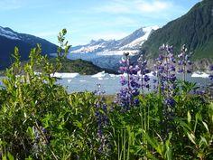 Mendenhall Glacier, Alaska- going in May 2013!!!!- check