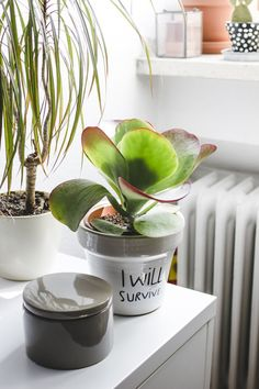 How will your plants survive without you during your holiday?