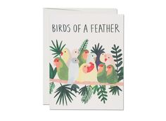 Birds of a Feather by Kate Pugsley for Red Cap Cards Anniversary Greeting Cards, Valentine Greeting Cards, Greeting Cards Handmade, Kate Pugsley, Valentines Card Design, New Baby Cards, Watercolor Cards, Birthday Greetings, Bird Feathers