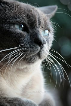"""""""The way to get on with a cat is to treat it as an equal – or even better, as the superior it knows itself to be."""" -- Elizabeth Peters"""