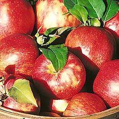 Honeycrisp Apple Tree - Apple Trees - Fruit Trees and Nut Trees - Gurney's Seed & Nursery Honeycrisp Apple Tree, Apple Harvest, Gardening Zones, Edible Garden, Trees And Shrubs, Zinnias, Garden Projects, Garden Ideas, Fruit Trees