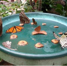 Cool! I didn't know we could make our own Butterfly Feeder!! I would love to have one in a summer home.