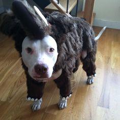 #pets #dogs #halloween #dogcostume @animalplanet