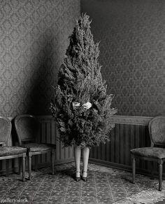 Oh Christmas Tree - sapin - Noel Noel Christmas, Christmas Humor, Christmas And New Year, Winter Christmas, All Things Christmas, Winter Holidays, Happy Holidays, Christmas Salon, Christmas Garden