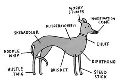 Breed-Specific Canine Anatomy — Maggie has worry stumps and an investigation cone