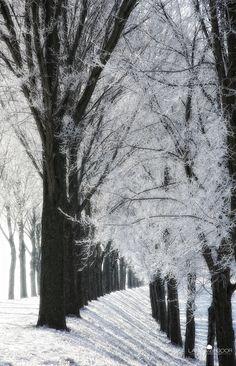 Winter in Netherlands