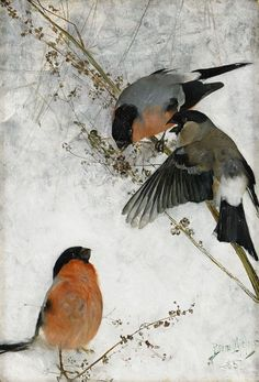 Bruno Liljefors (1860-1939) - Bullfinches, oil on canvas. 1885//