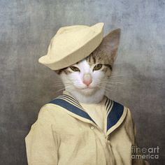 Creative Cats, Kitschy, Living, Sailor, and Cat image ideas & inspiration on Designspiration Crazy Cat Lady, Crazy Cats, Funny Animals, Cute Animals, Cat Hat, Cat People, Cool Cats, Pet Portraits, Kitsch