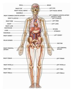 ... structures labeled more body anatomy theory human school human anatomy
