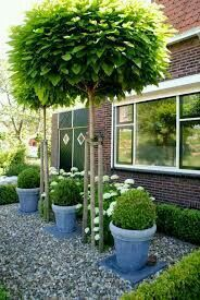 Garden Screening Ideas - Screening could be both attractive and also sensible. From a well-placed plant to upkeep complimentary fencing, here are some imaginative garden screening ideas. Back Gardens, Small Gardens, Outdoor Gardens, Small Front Yards, Garden Screening, Screening Ideas, Landscaping Trees, Landscaping Design, Side Garden