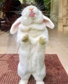 the windows are not clean let me lick them up with my little bunny tongue – Jasmin - Baby Animals Cute Little Animals, Cute Funny Animals, Funny Animal Pictures, Cute Baby Bunnies, Cute Babies, Funny Bunnies, Bunny Care, Pet Rabbit, Ruby Rabbit