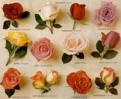 Birth month roses.