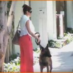 "Belgian Malinois: Eva Mendes And Her Guard Dod Take A Stroll In West Hollywood (Video)  Watch the video on next page. You won't believe it. It's actress Eva Mendes! How many times have you seen a celebrity walking on the street together with her dog?  This just means that celebrities no matter how ""sexy, ""macho"" and ""comedian"" they are, they love dogs. They even walk their dog on public places even if this reveals their identity.  Watch the video below. One of the famous and sexies.."
