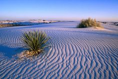 Here Is A Wonderful Wine Rippled Dune Landscape, New Mexico. Part ...
