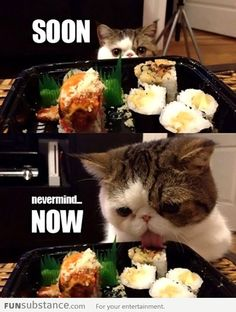 #funny #cats #funny {Nevermind human}
