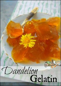 Sunshine Flavored Gelatin Wondering what to do with your dandelions? Forage them and make dandelion gelatin of course! With dandelion honey and turmeric this is a healthy treat everyone will love. Edible Plants, Edible Flowers, Healthy Treats, Healthy Recipes, Dandelion Recipes, Gelatin Recipes, Candy Recipes, Paleo Honey, Flower Food