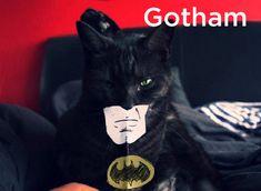 20 #Cats As Fonts - #gotham
