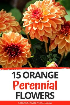 Orange perennial flowers are great for bringing color to flower gardens and containers. Here are 15 beautiful, bright orange perennials to plant in your flower garden. #flowers #perennials #flowergarden