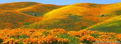 flowers field 8 Facebook Cover