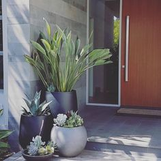 Balcony garden - The Balcony Garden Featured Projects by MG Gardens desingerpots pots greenery entrance styling outdoorliving plantsandpots blackpots greypots - Backyard Landscaping Plantas Indoor, Pot Jardin, Balkon Design, House Plants Decor, Garden Features, Garden Care, Front Yard Landscaping, Landscaping Ideas, Front Garden Landscape