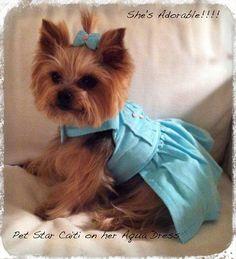 Aqua Dog Dress XSSMLXL Dog ClothesPet by SophiesPetCloset on Etsy, $36.00