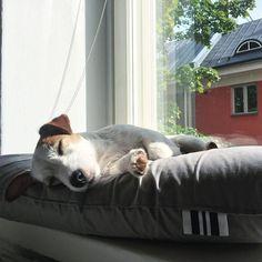 Sleepy day by wavethatstranger