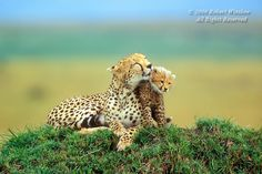 Google Image Result for http://www.robertwinslowphoto.com/Animals/Baby-Animals/Baby-Animals-African-and-Asian/A-687-AN-11W8C/851910894_k79nD-L.jpg