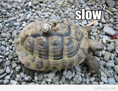 Funny slow animals in one picture