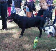 The 9 most newsworthy dogs of 2012 - #dogs #dognews