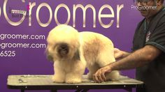 How to groom a Lhasa Poo - Pet Trim - Grooming Guide - Pro Groomer