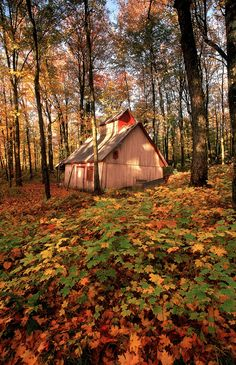Nestled in a maple forest, a Sugar shack in Beauce, Quebec ~ Suzanne Prager via Laura Petrosky onto Oh, the places you will go!