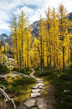 A stone pathway leads you into a beautiful grove of aspens in the Canadian Rockies by Craig Brown