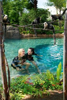 Wade and float in the sparkling clear springs of Freshwater Oasis, and gaze at the marmosets at play. Vacation Days, Dream Vacations, Discovery Cove Orlando, Florida Travel, Florida 2017, Laying On The Beach, Florida Holiday, Orlando Parks, Relaxing Places