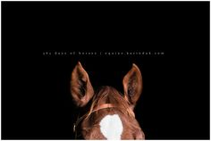 Karinda K Equine Photography equine.karindak.com