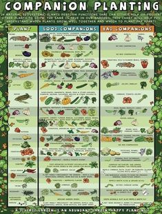 Companion planting for your garden by shopportunity
