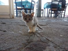 Very young kitty in lesvos greece