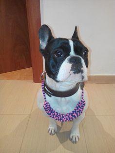 'Lola', the French Bulldog